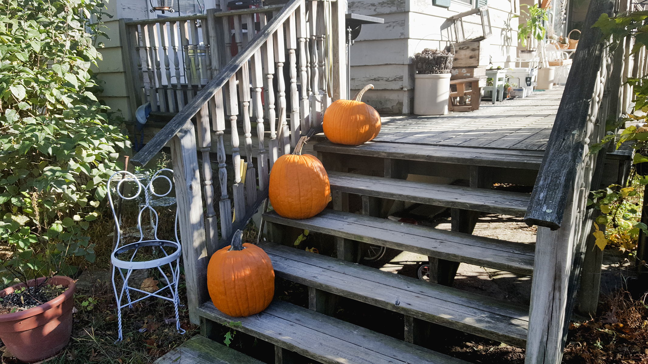 hudson valley fall 2019 upstate new york - pumpkins