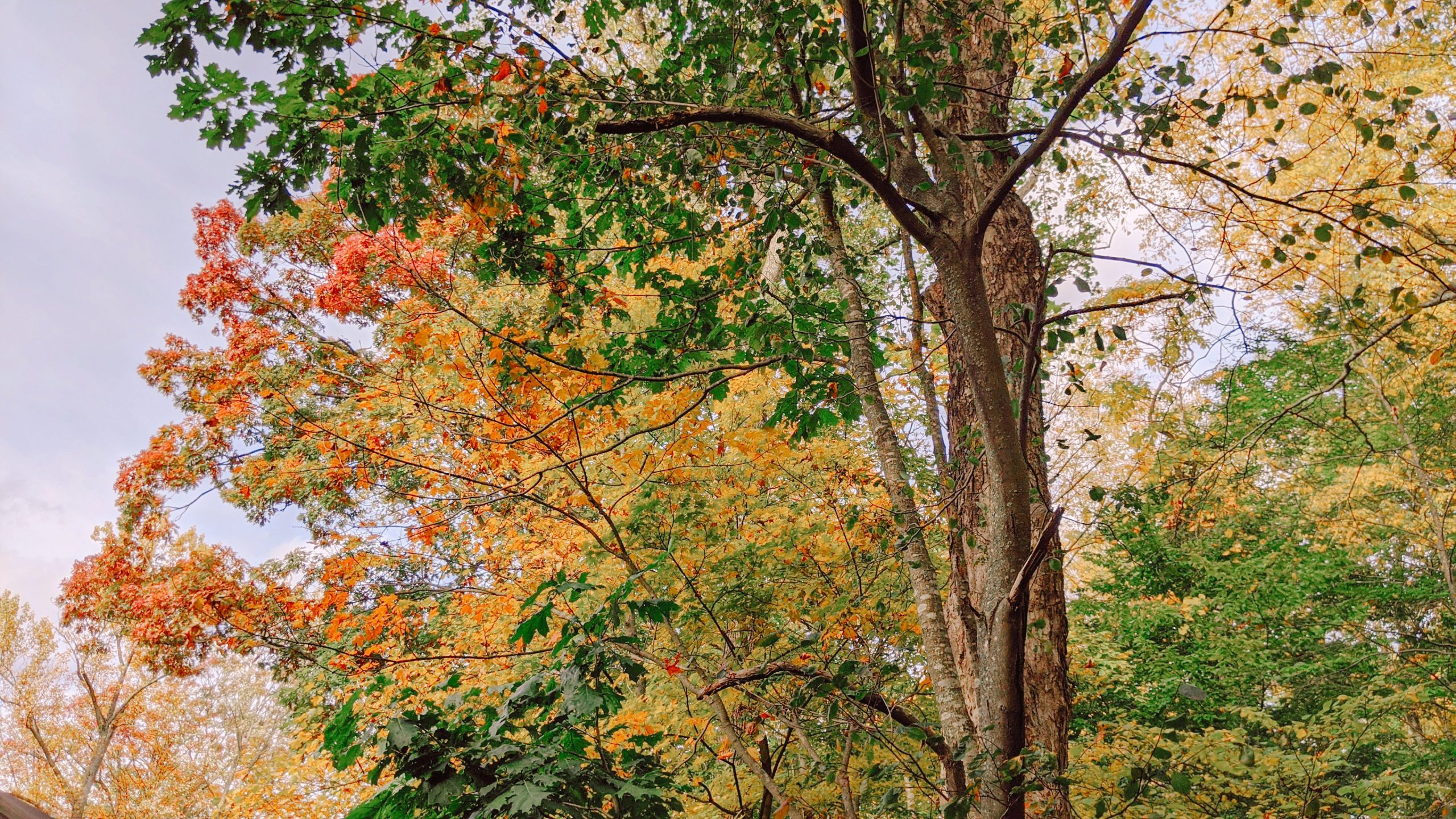 fall foliage - nyc hudson valley - hey mishka blog (6)