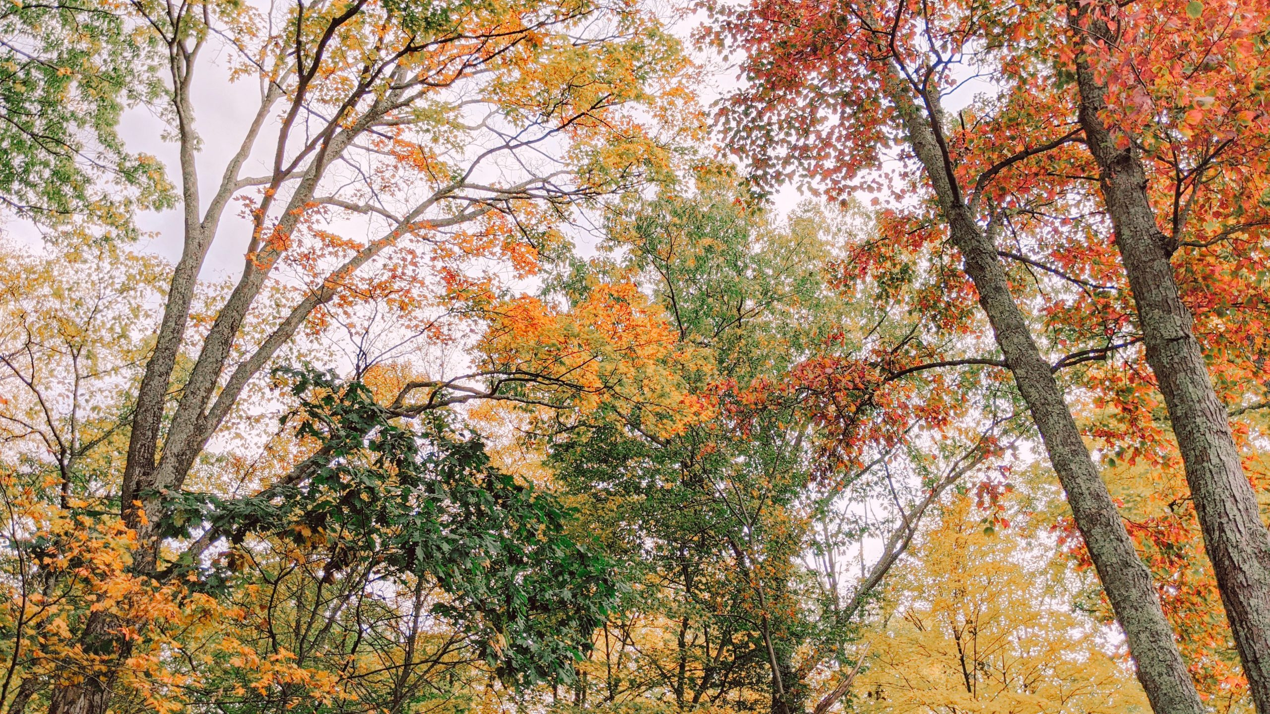 fall foliage - nyc hudson valley - hey mishka blog (7)